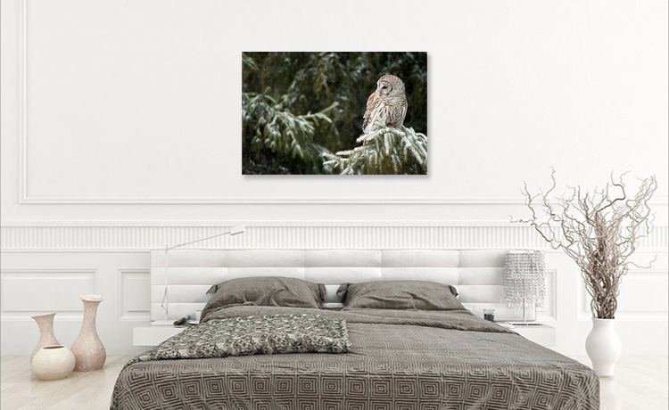 Wall Display Owl