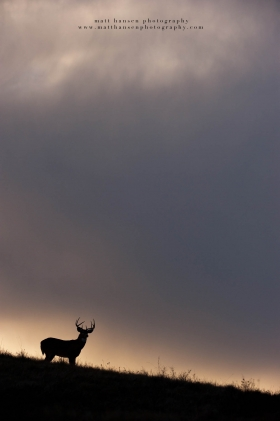 silhouette of a buck against the sky