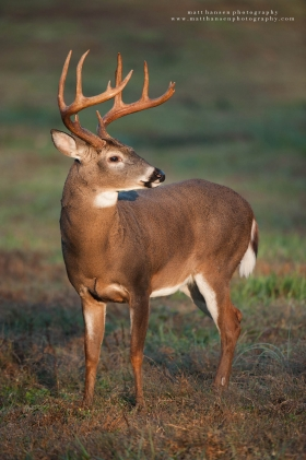 big buck sunrise portrait