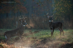 a big buck and small buck stand in a fall field at sunrise with breath visible