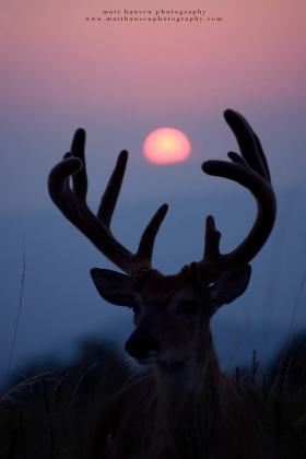 a big buck in velvet silhouette with sun visible