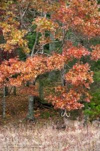 an environmental view of a buck at an autumn licking branch
