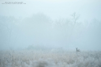 an environmental view of a buck jumping through a frosty field