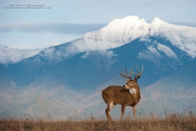 A huge buck stands on a ridge with mountains behind him.
